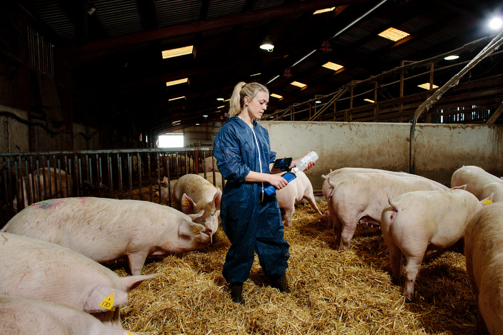 Inspecting the pigs with BCF Technologies equipment